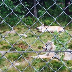 Zoo i världen